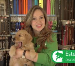 Discus Tipclip | Benodigdheden puppy